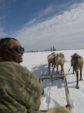 A Nomadic Komi Reindeer Herder Drives His Team Through Spring Snow Photographic Print by Gordon Wiltsie