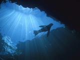 Galapagos Sea Lion (Zalophus Wollebaeki) Silhouetted by Surface Sunlight, Galapagos Islands Photographic Print by Hiroya Minakuchi/Minden Pictures