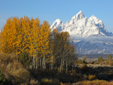Fall Colors in Grand Teton National Park, Wyoming Photographic Print by Drew Rush