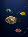 Robotic Fish Developed at Mit Photographic Print by Tim Laman