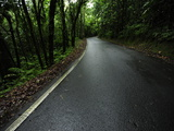 A Paved Road Winds Through El Yunque National Forest Photographic Print by Raul Touzon