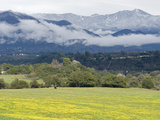 A Field of Mustard Below the Santa Ynez Mountains from Oak View Photographie par Rich Reid