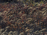 Grass in the Fall Photographic Print by Michael S. Quinton