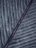 Feather, 28X Magnification, Barbs and Interlocking Barbules Which Provide Structural Strength Photographic Print by Albert Lleal/Minden Pictures