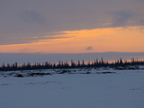 Sunset over a Taiga Forest of Spruce Birch That Grow Next to Streams Photographic Print by Gordon Wiltsie
