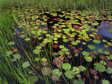 Pond with Lily Pads and Grasses, Cape Cod, Massachusetts Photographic Print by Tim Fitzharris/Minden Pictures