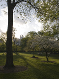 Late Afternoon in Piedmont Park in Midtown, Atlanta Fotoprint av Krista Rossow