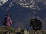 A Ladakhi Person Approaches a Yak in the Zanskar Valley Photographic Print by Steve Winter