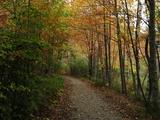 Autumn Foliage in Acadia National Park Photographic Print by Raul Touzon