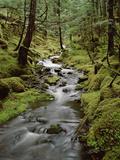 Creek in Temperate Rainforest Along Eyak Lake, Cordova, Alaska Photographic Print by Matthias Breiter/Minden Pictures