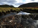 A Beaver Dam in Acadia National Park Photographic Print by Raul Touzon