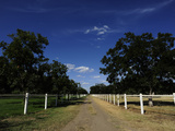 A Tree-Lined Dirt Road at a Horse Ranch Photographic Print by Raul Touzon