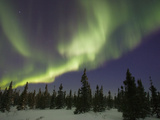 Northern Lights or Aurora Borealis over Boreal Forest, North America Photographic Print by Matthias Breiter/Minden Pictures