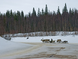 Komi Reindeer Herder Drives His Team Along a Dangerous Melting Stream Photographic Print by Gordon Wiltsie