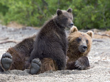 Brown Bear (Ursus Arctos) Mother and Cub, Kamchatka, Russia Photographic Print by Sergey Gorshkov/Minden Pictures