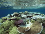 Great Barrier Reef Near Port Douglas, Queensland, Australia Photographic Print by Flip Nicklin/Minden Pictures
