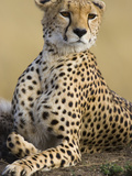 Cheetah (Acinonyx Jubatus) Adult Female Portait, Maasai Mara Reserve, Kenya Photographic Print by Suzi Eszterhas/Minden Pictures