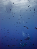 Divers Descend Through Schools of Fish to Reach the Reef Below Photographic Print by Ben Horton