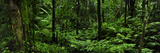 Lush Vegetation in El Yunque National Forest Photographic Print by Raul Touzon