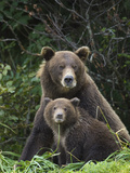 Grizzly Bear (Ursus Arctos Horribilis) Mother and 6 to 8 Month Old Cub, Katmai Nat'l Park, Alaska Photographic Print by Suzi Eszterhas/Minden Pictures