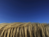 A Horses Mane Against a Blue Sky Photographic Print by Raul Touzon