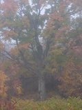 An Oak Tree Sits in the Mist on a Fall Morning in Quebec Photographic Print by Kenneth Ginn
