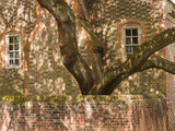 A Tree Grows from the Brick Courtyard of a Historic Colonial Home Photographic Print by  Greg