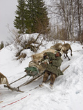 A Komi Nomadic Herder Slows Down a Sled from Crushing a Reindeer Photographic Print by Gordon Wiltsie