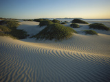 Sand Dunes Stabilized by Vegetation, Magdalena Island, Baja California, Mexico Photographic Print by Tui De Roy/Minden Pictures
