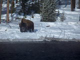 A Bison Standing in Deep Snow in Yellowstone National Park Photographic Print by Mark Thiessen