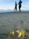 Ghost Crab (Ocypode Quadrata) and Tourists on Beach, Urucuca, Bahia, Brazil Fotografie-Druck von Luciano Candisani/Minden Pictures