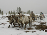 A Nomadic Komi Reindeer Herder Between Tundra and Taiga Forests Photographic Print by Gordon Wiltsie
