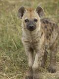 Spotted Hyena (Crocuta Crocuta) Portrait, Masai Mara Reserve, Kenya Photographic Print by Suzi Eszterhas/Minden Pictures