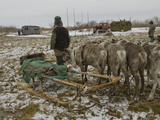Komi Reindeer Herders Watch a Tractor Pull a Load of Hay for Cattle Photographic Print by Gordon Wiltsie