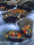 Autumn Leaves on Wet Boulders in Stream, Great Smoky Mountains National Park, North Carolina Photographic Print by Tim Fitzharris/Minden Pictures