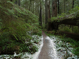 A Rare Dusting of Snow in Del Norte Redwoods State Park Photographic Print by National Geographic Photographer