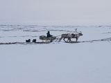 A Komi Reindeer Herder Travels on a Sled Watching the Herd Photographic Print by Gordon Wiltsie