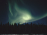 Aurora Borealis over Spruce Forest, Chena Hot Springs, Alaska Photographic Print by Matthias Breiter/Minden Pictures
