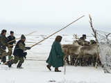 Komi Nomads Herding Reindeer to Select Some to Pull their Sleds Photographic Print by Gordon Wiltsie