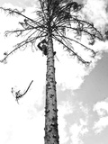 Cutting Down a Tree That Has Died in Jackson Hole, Wyoming Photographic Print by Drew Rush