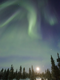 Northern Lights or Aurora Borealis over Boreal Forest with Rising Moon, North America Photographic Print by Matthias Breiter/Minden Pictures