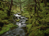 Creek in Temperate Rainforest Along Eyak Lake, Cordova, Alaska Photographic Print by Matthias Breiter/Minden Pictures