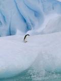 Adelie Penguin (Pygoscelis Adeliae) on Iceberg, Paulet Island, Weddell Sea, Antarctica Photographic Print by Tui De Roy/Minden Pictures
