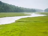 Salt Marsh and Estuary Along Shore, New Brunswick, Canada Photographic Print by Scott Leslie/Minden Pictures