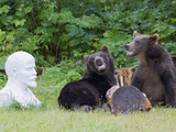 Brown Bear (Ursus Arctos) Pair Near Statue, Kamchatka, Russia Photographic Print by Sergey Gorshkov/Minden Pictures