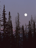 Full Moon over Trees at Dusk, Cedar Breaks Nat'l Monument, Cedar City, Utah Photographic Print by Tom Vezo/Minden Pictures