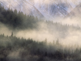 Fog in Old Growth Forest, Chilkat River Wilderness, Alaska Photographic Print by Gerry Ellis