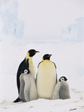 Emperor Penguin (Aptenodytes Forsteri) Parents with Two Chicks, Antarctica Photographic Print by Konrad Wothe