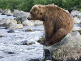 Brown Bear (Ursus Arctos) Sitting on Rock in River, Kamchatka, Russia Photographic Print by Sergey Gorshkov/Minden Pictures