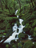 Falls on Cataract Creek, after a Winter Storm, Mount Tamalpais State Park, California Photographic Print by Suzi Eszterhas/Minden Pictures